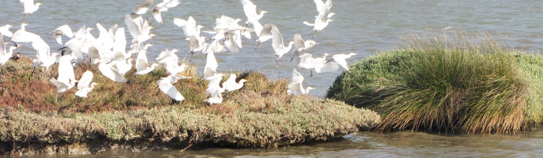 ציפורים, רשות נחל הקישון