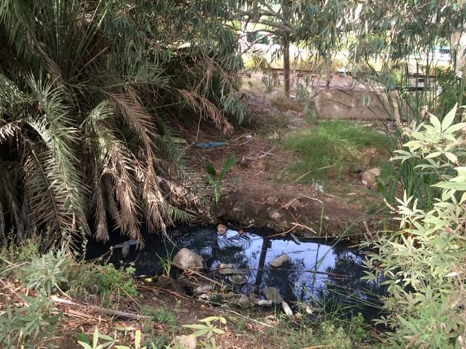 תעלת הניקוז בנחל סעדיה לפני העבודות (צילום: רקפת קובליו רוט, רשות נחל הקישון)